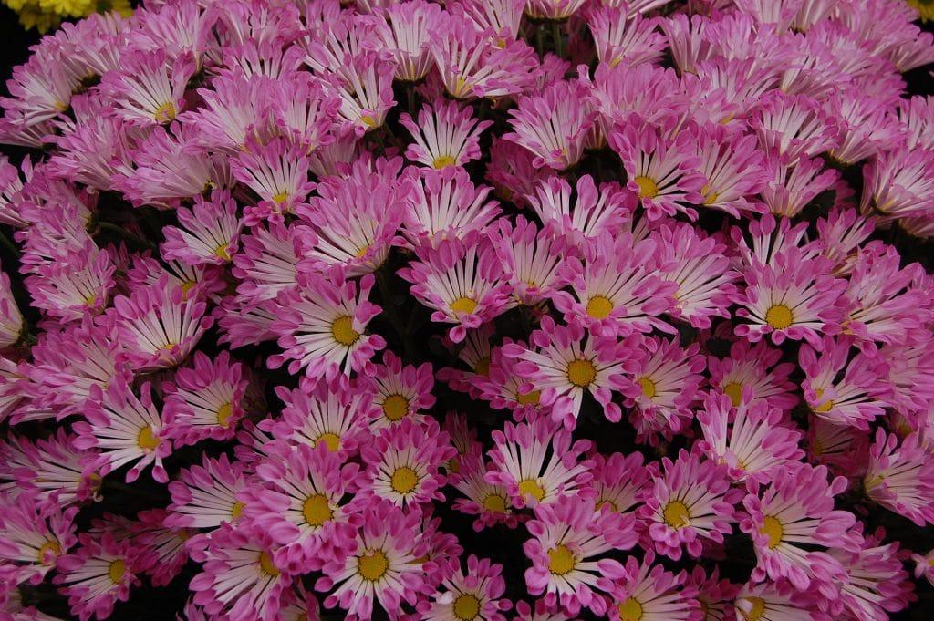 Blumen am Grab